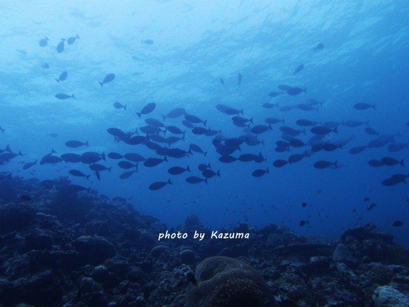 オスジクロハギ photo by OLIMPUS XZ-1