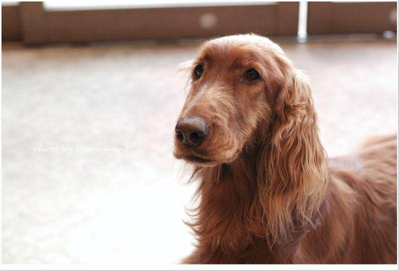 コリンズDCの看板犬