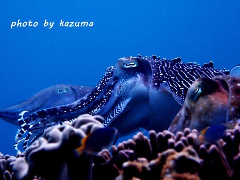 コブシメ! photo by OLYMPUS XZ-1