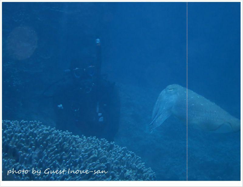 コブシメとヒメ photo by CANON PowerShot S100