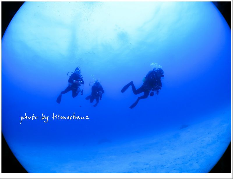 竹富島の砂地を遊泳