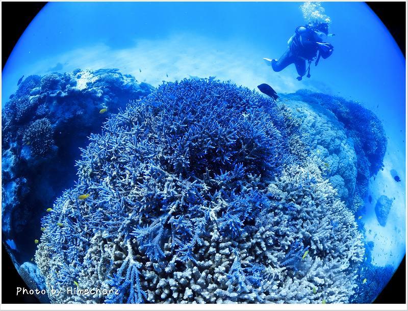 サンゴがキレイ!