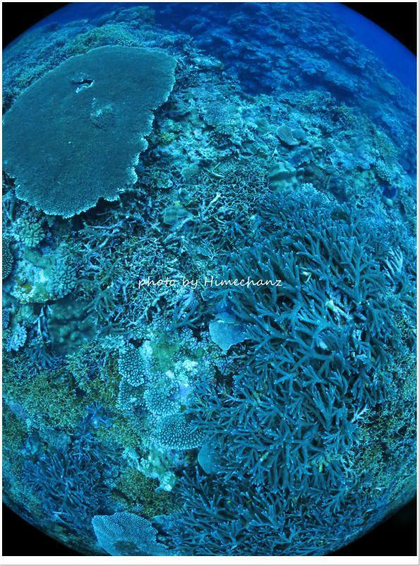 石西礁湖のサンゴ photo by CANON PowerShot S100