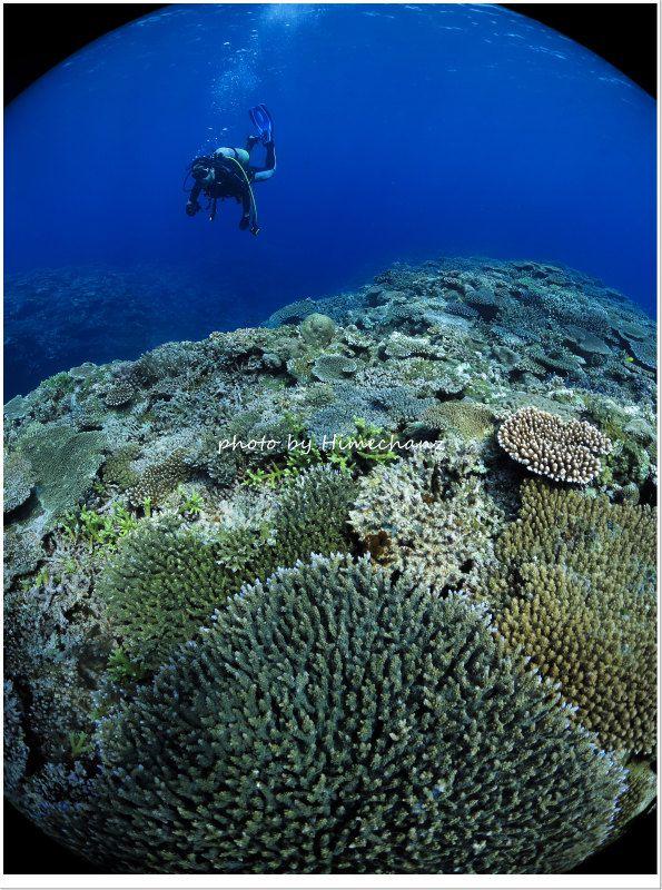 三石のサンゴに癒される photo by CANON PowerShot S100