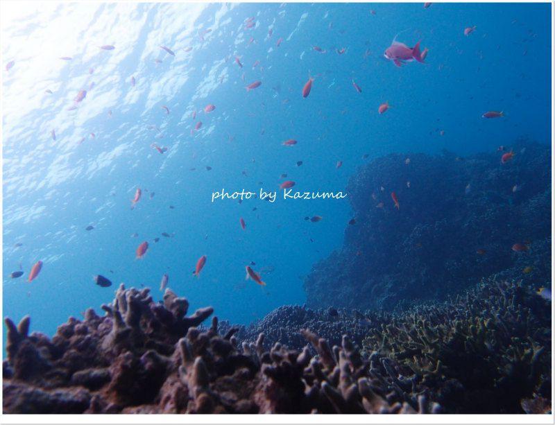 アカネハナゴイとキンギョハナダイの群れ photo by OLYMPUS XZ-1
