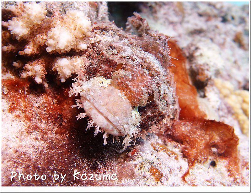 ウルマカサゴ photo by OLYMPUS XZ-1