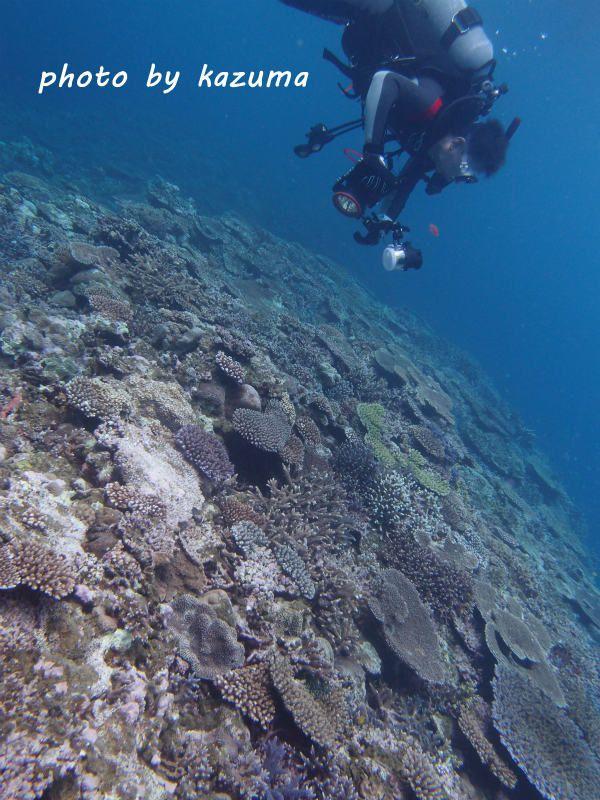 きれいな珊瑚 photo by OLYMPUS XZ-1