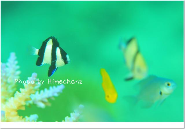 かわいい魚に囲まれたい!