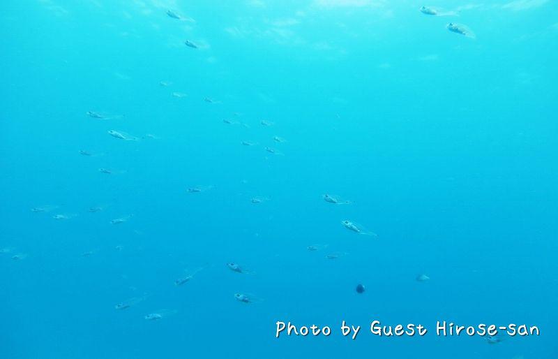 スカシテンジクダイの群れ photo by CANON PowerShot S100