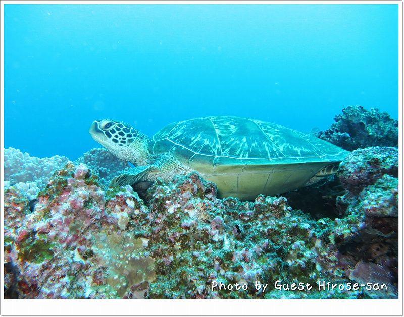 アオウミガメ photo by CANON PowerShot S100
