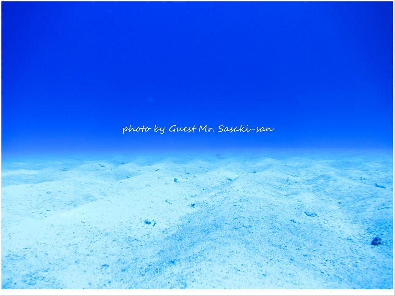 ブルー&ホワイトな世界♪