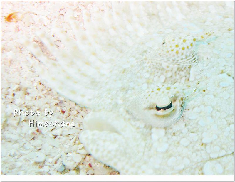 トゲダルマガレイ photo by CANON PowerShot S100