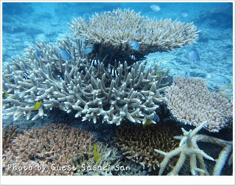 元気いっぱいなサンゴたち photo by CANON PowerShot S100