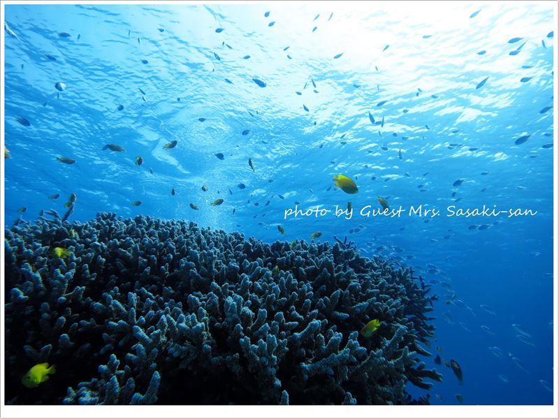 サンゴ礁の世界
