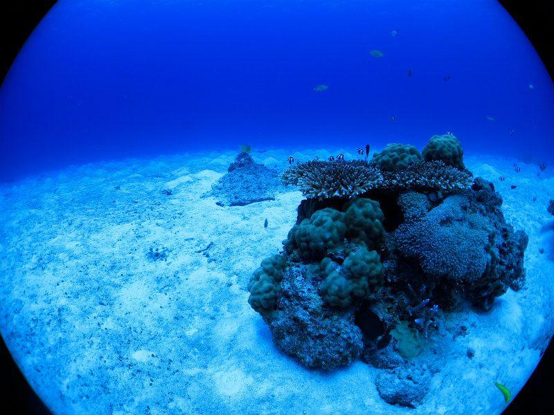 サンゴと砂地と幼魚たち photo by CANON PowerShot S100