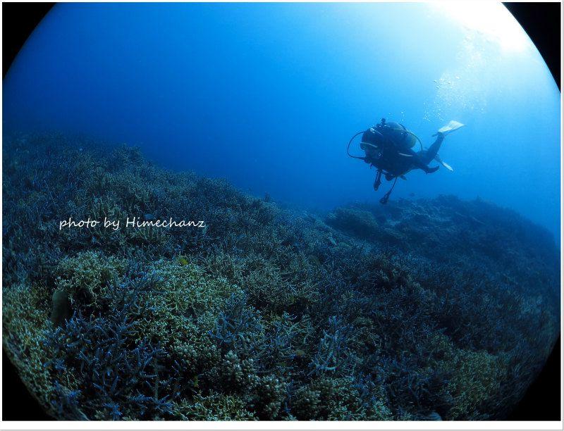 サンゴキレイゾーンでまったりと♪ photo by CANON PowerShot S100