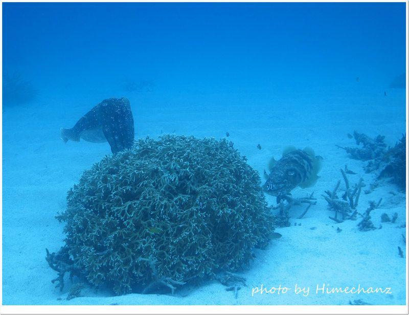 コブシメの産卵シーン photo by CANON PowerShot S100
