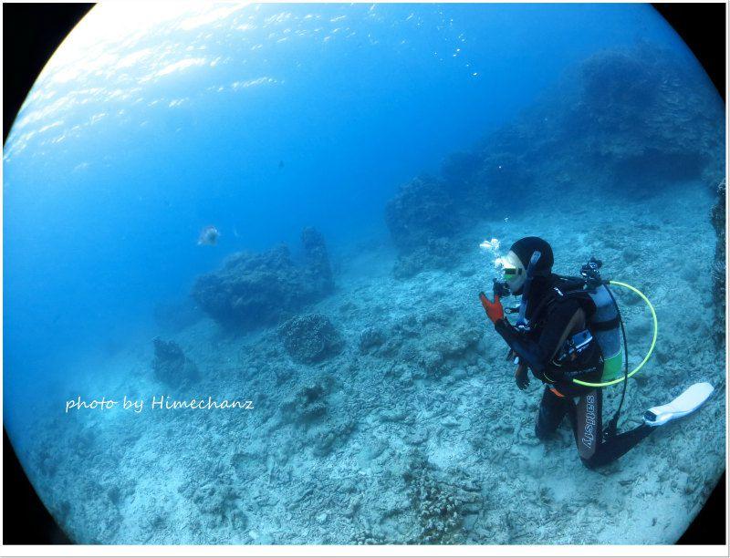 トータル60分コブシメ観察しましたw photo by CANON PowerShot S100