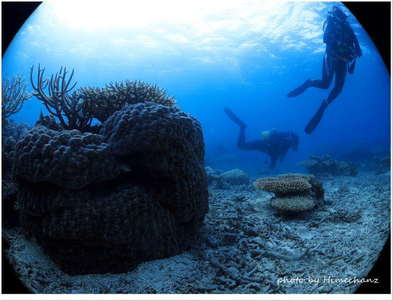 ヒメ大好きな盆栽サンゴ photo by CANON PowerShot S100