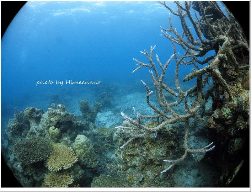 様々なサンゴたち photo by CANON PowerShot S100