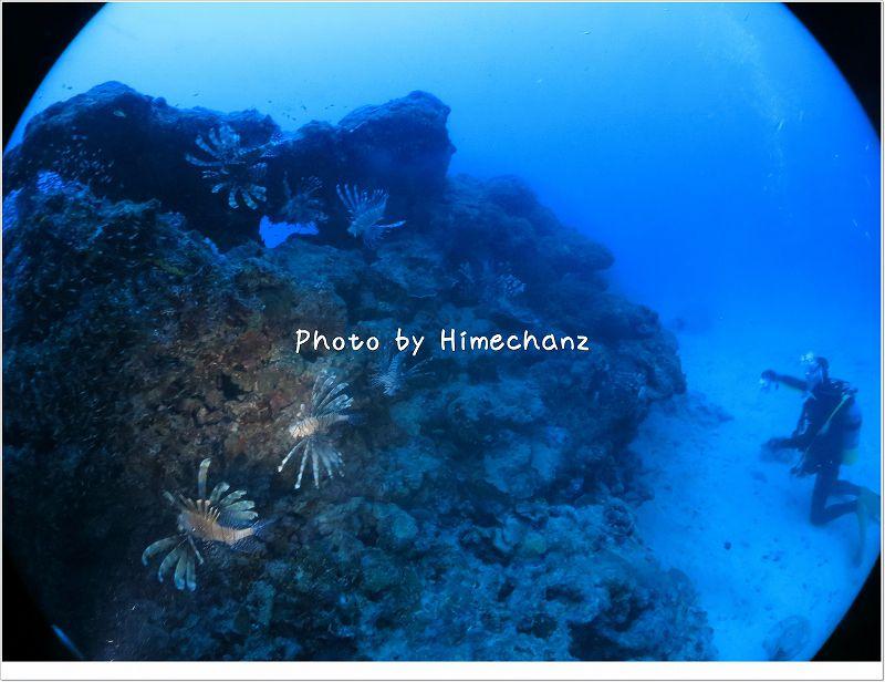 沢山のハナミノカサゴ photo by CANON PowerShot S100