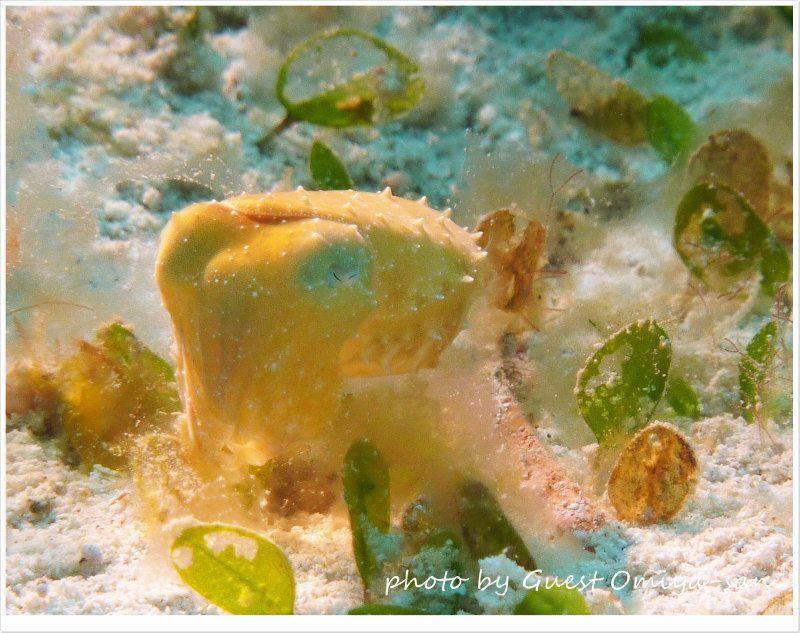 コブシメの赤ちゃん photo by Panasonic DMC-TZ7