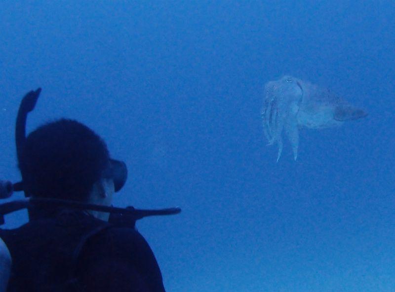 コブシメと睨めっこ photo by Olympus XZ-1