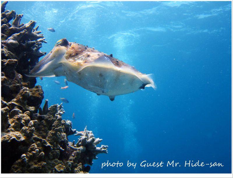 コブシメの産卵シーンももうすぐ終わりかな photo by CANON PowerShot S95
