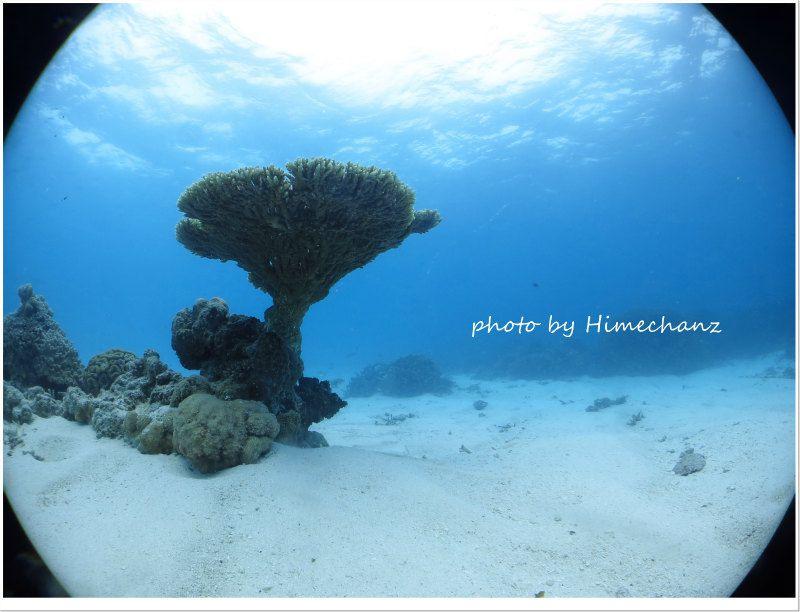 砂地にそびえるサンゴ photo by CANON PowerShot S100