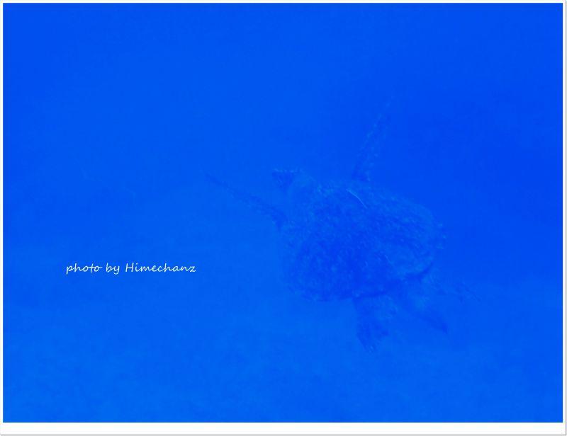 アカウミガメ photo by CANON PowerShot S100