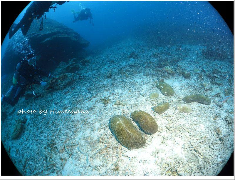 水底にゴリの似顔絵まだありましたw photo by CANON PowerShot S100