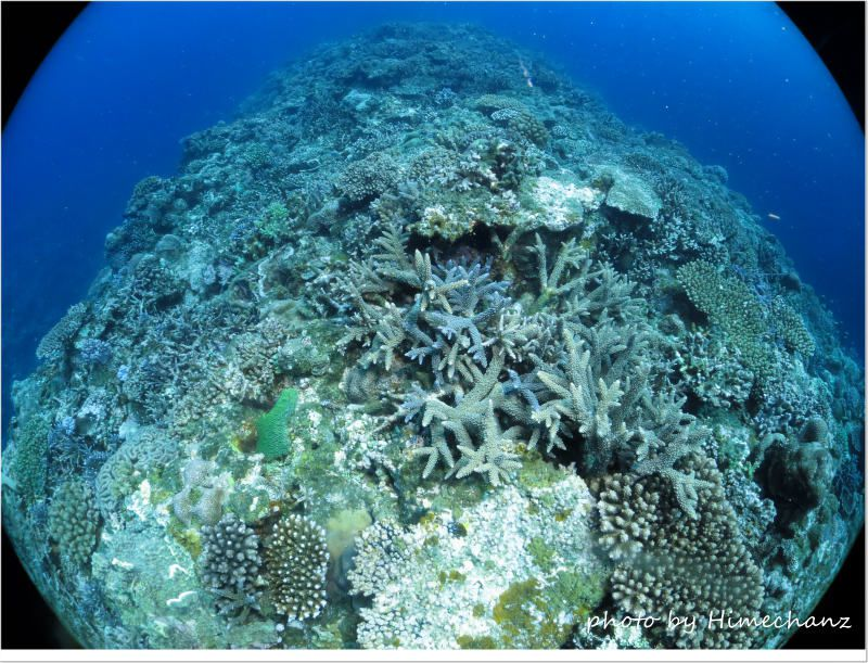 極上サンゴに囲まれて♪ photo by CANON PowerShot S100