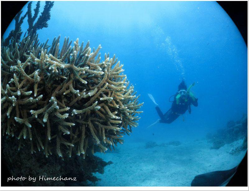サンゴにたっぷり癒されてきました♪ photo by CANON PowerShot S100