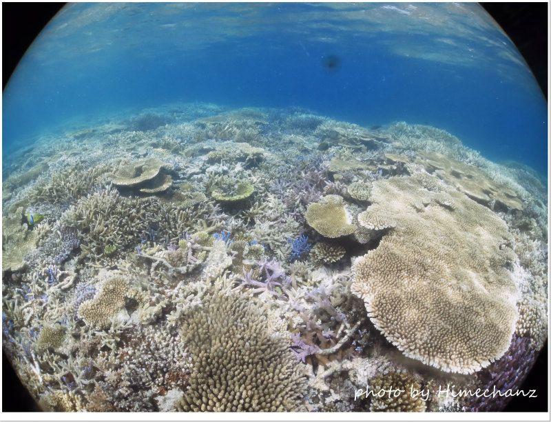 浅瀬のサンゴ礁 photo by CANON PowerShot S100
