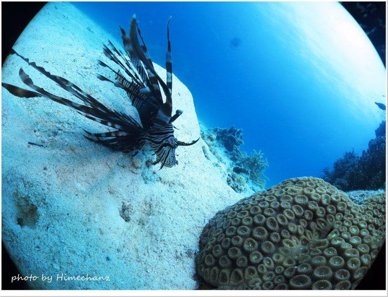 ハナミノカサゴ幼魚 photo by CANON PowerShot S100
