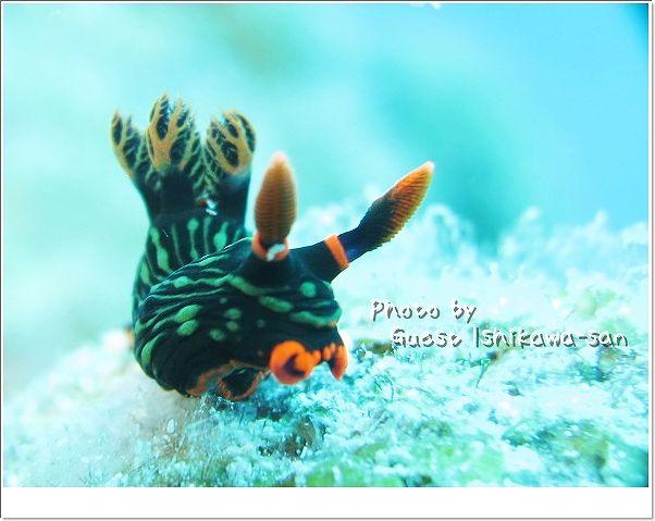 アカフチリュウグウウミウシ photo by CANON PowerShot S100