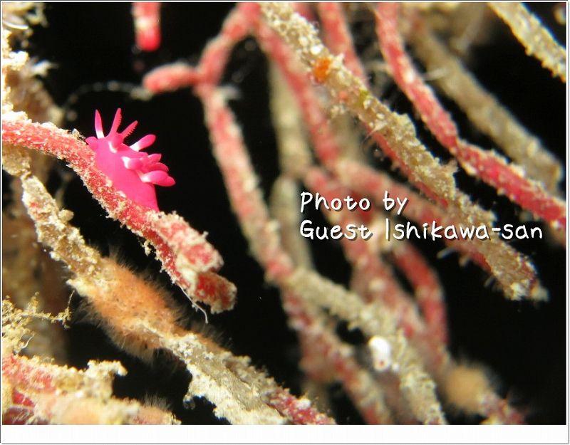 ちっこかわいいミナミヒロウミウシ photo by CANON PowerShot S100