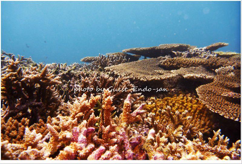 イロトリドリのサンゴ photo by Panasonic Lumix FT2