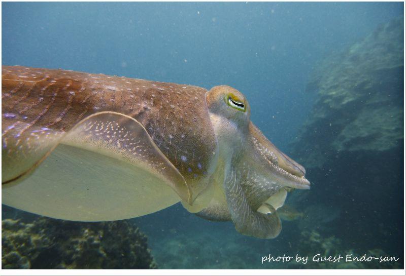 コブシメのエロ目が好きらしいw photo by Panasonic Lumix FT2