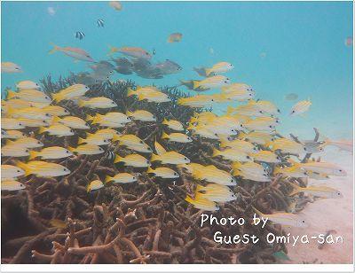 美しいヨスジフエダイたち photo by Panasonic DMC-TZ7