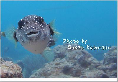 サザナミフグとにらめっこ photo by OLIMPUS XZ-2