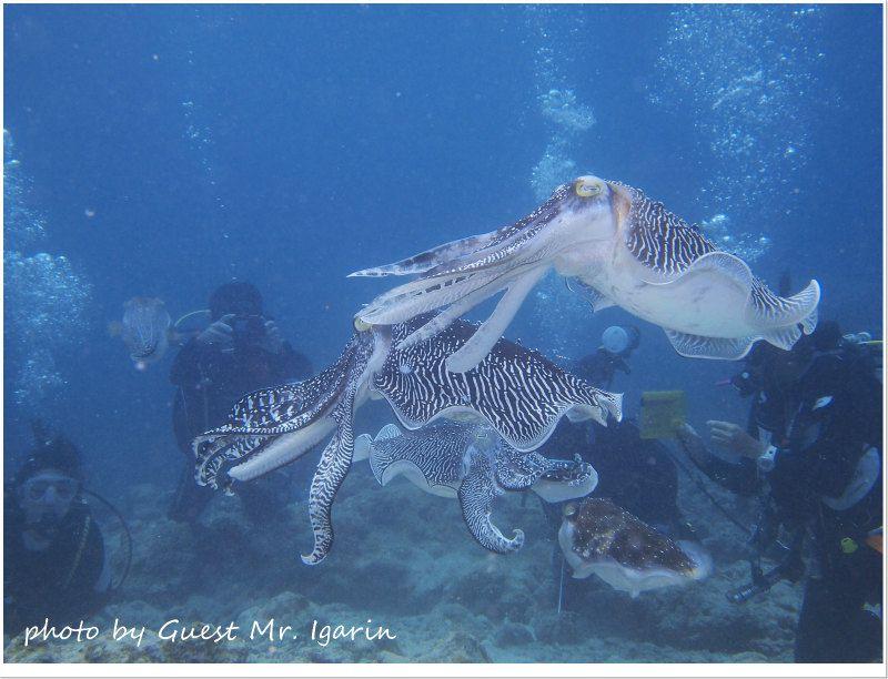 コブシメのオスの喧嘩シーン photo by OLYMPUS PEN Lite E-PL3