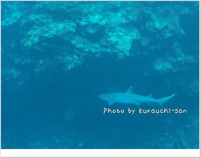 ホワイトチップ登場! photo by CASIO EX-S10