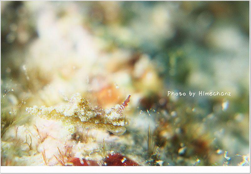 謎の極小ウミウシ5 photo by Nikon D300