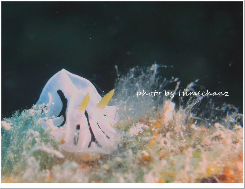 白いユキヤマウミウシ photo by CANON PowerShot S100