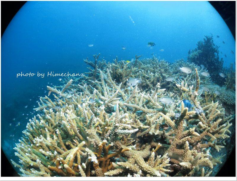 石垣島はやっぱりサンゴだね! photo by CANON PowerShot S100