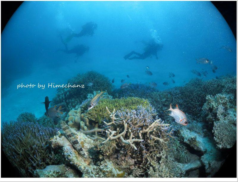 サンゴキレイゾーンを遊泳中♪ photo by CANON PowerShot S100
