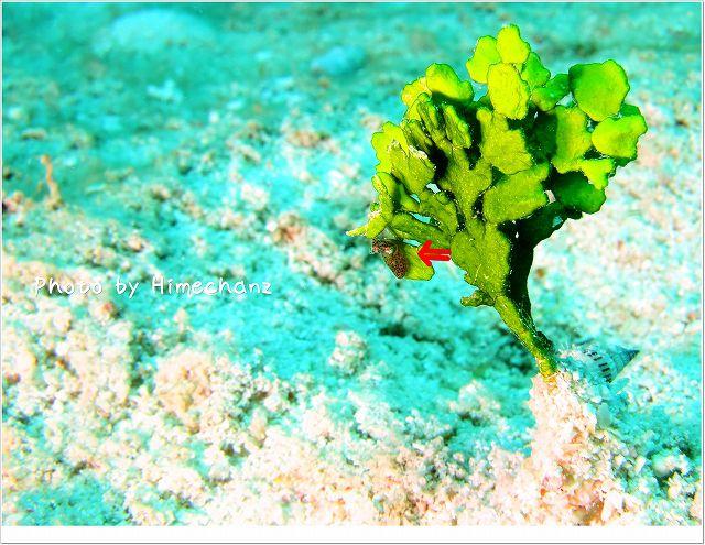 極小なイカ。ヒメイカ。 photo by CANON PowerShot S100