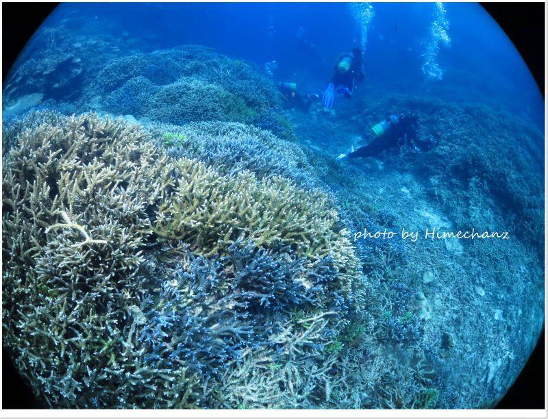 皆さんサンゴに夢中♪ photo by CANON PowerShot S100
