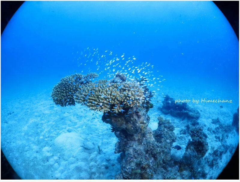 デバスズメダイの幼魚群れ photo by CANON PowerShot S100